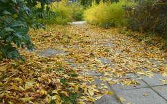 levél ősz út