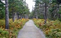 ősz kanada prince edward island út erdő