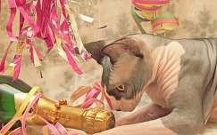 szilveszter macska pezsgő ital