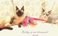 macska szilveszter
