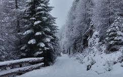 tél út erdő