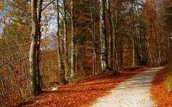 ősz út