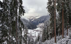 tél hegy fenyő