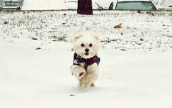 tél kutya