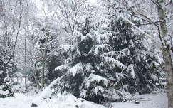 kertek és parkok tél fenyő