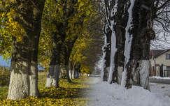 Ősz vs tél