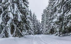 erdő fenyő tél erdély út kárpátok románia