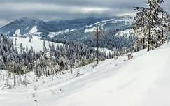 fenyő tél hegy erdély románia erdő kárpátok