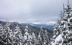 erdő tél hegy erdély kárpátok románia