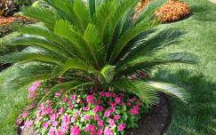 Saint Louis Botanikus kert ,Missouri, USA