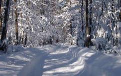 Út a téli erdőben