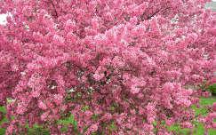Tavasz  ,kiviragzott fa