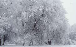havazás tél fa