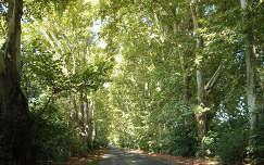 Etyek- platános út, fotó: Kőszály