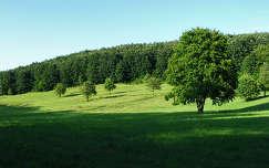 Ilona-völgy