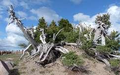 Oregon állam, Kráter tónál,USA