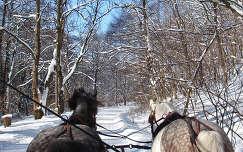 Szalajkavölgyben  lovaszánkóval 2010 február