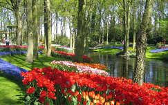 Keukenhof, Hollandia