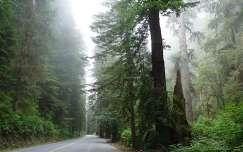 Redwood USA