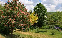 Balatoni fák