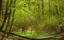 Magyarország, Zala-megye, Rédics, erdő, fák