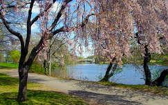 Virágzó fák a folyóparton