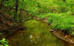 Magyarország, Zala megye, Rédics, erdő, vízfolyás, tavasz, víz