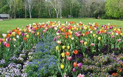 Szeged, park, virágok, tulipán, Magyarország.
