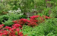 Rhododendronok