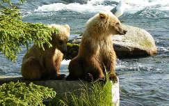 Katmai Nemzeti Park, Alaszka