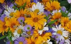 nyári virág virágcsokor és dekoráció