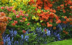 Rododendronok és harangvirágok