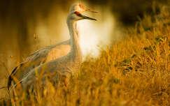 daru madár vizimadár naplemente