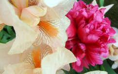 Írisz+pünkösdi rózsa