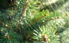 pókháló fény