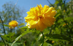 sárga labda virág