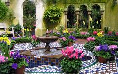 fokföldi ibolya nárcisz ciklámen kertek és parkok