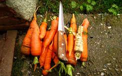 sárgarépa, zöldség, előkészítés :-)