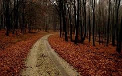 út, ősz