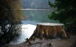 szalajka völgy fa tó ég