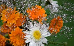 névnap és születésnap margaréta körömvirág nyári virág virágcsokor és dekoráció