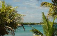 mauritius tenger pálma