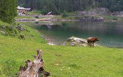 Ausztria,Gosau tó