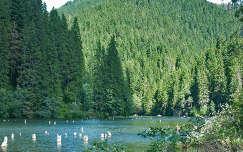 Gyilkos tó-Erdély-Székelyföld- Fotó: Kőszály
