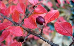 színes levél ősz