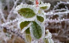 Téli varázs