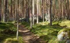 Finnország - Meseerdő