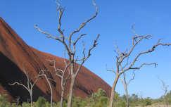 Fák az Uluru-nál