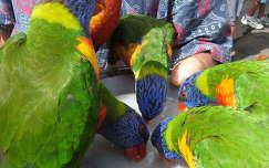 Egy szines pillanat. Papagájok Ausztráliában