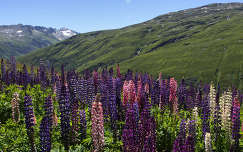 Svájci hegyi táj
